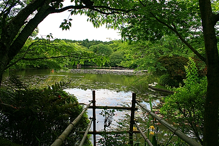 Blick auf den wunderschönen Kyoyochi Teich