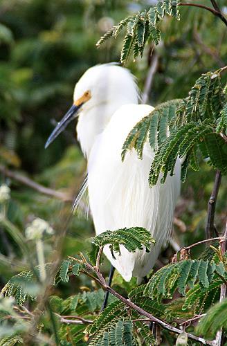Alcatraz Insel der Vögel