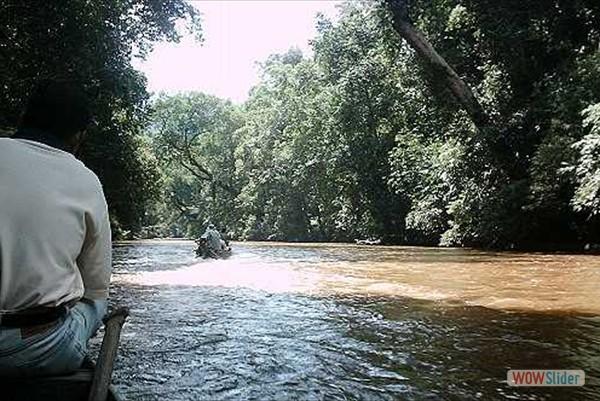 Wasserwege im Nationalpark Taman Negara