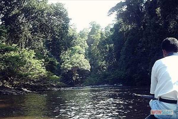 mitten im Regenwald