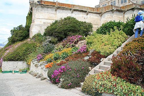 Alcatraz Blumengarten