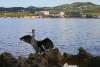 In der Bucht von Sant Antoni de Pormany